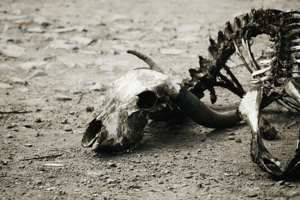 decomposition of an animal