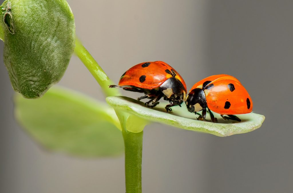 2 ladybugs coupling - legacy applications