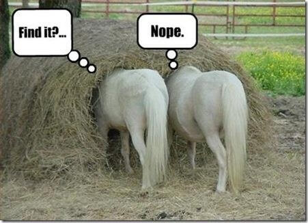 2 horses in a haystack -- looking through code, should use best technical practices
